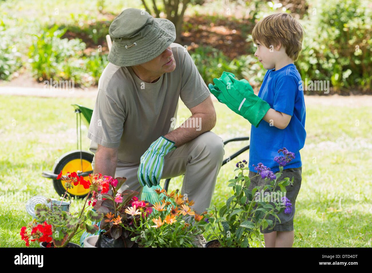 Grandfather and grandson engaged in gardening - Stock Image