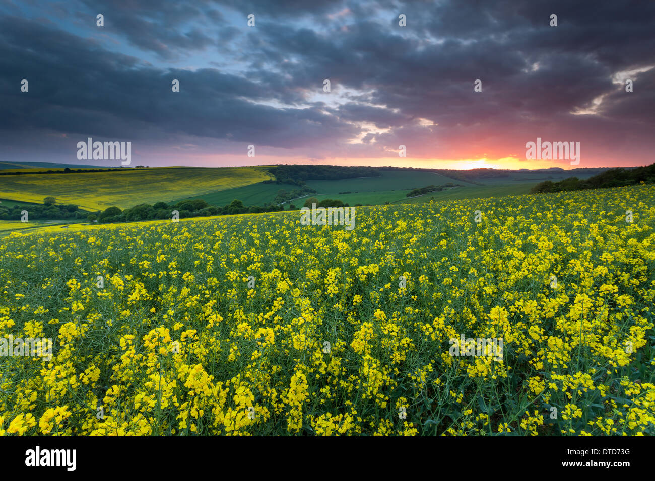 Spring sunset in South Downs National Park, East Sussex, England. - Stock Image