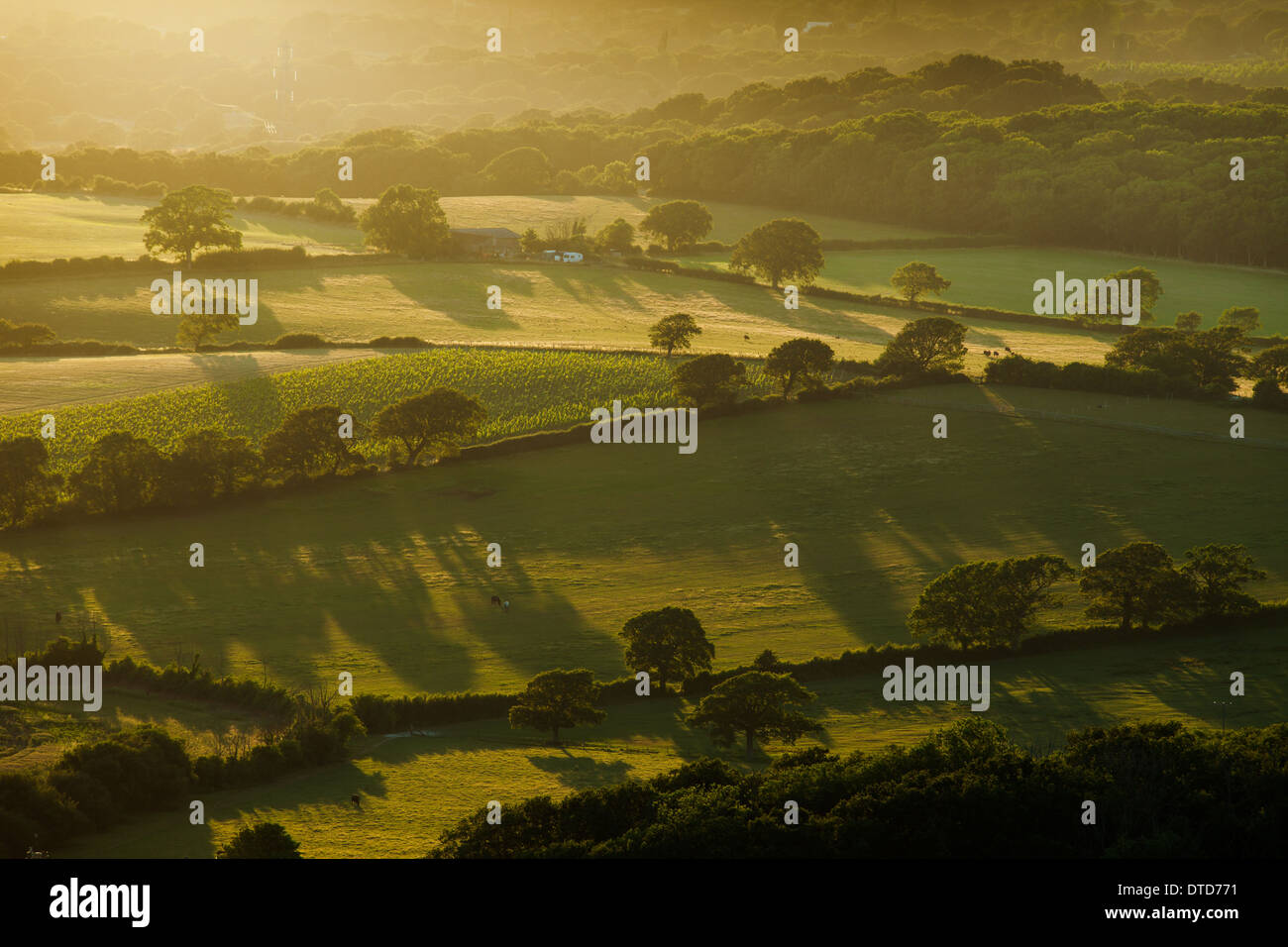 Evening on the South Downs near Poynings, West Sussex, UK - Stock Image