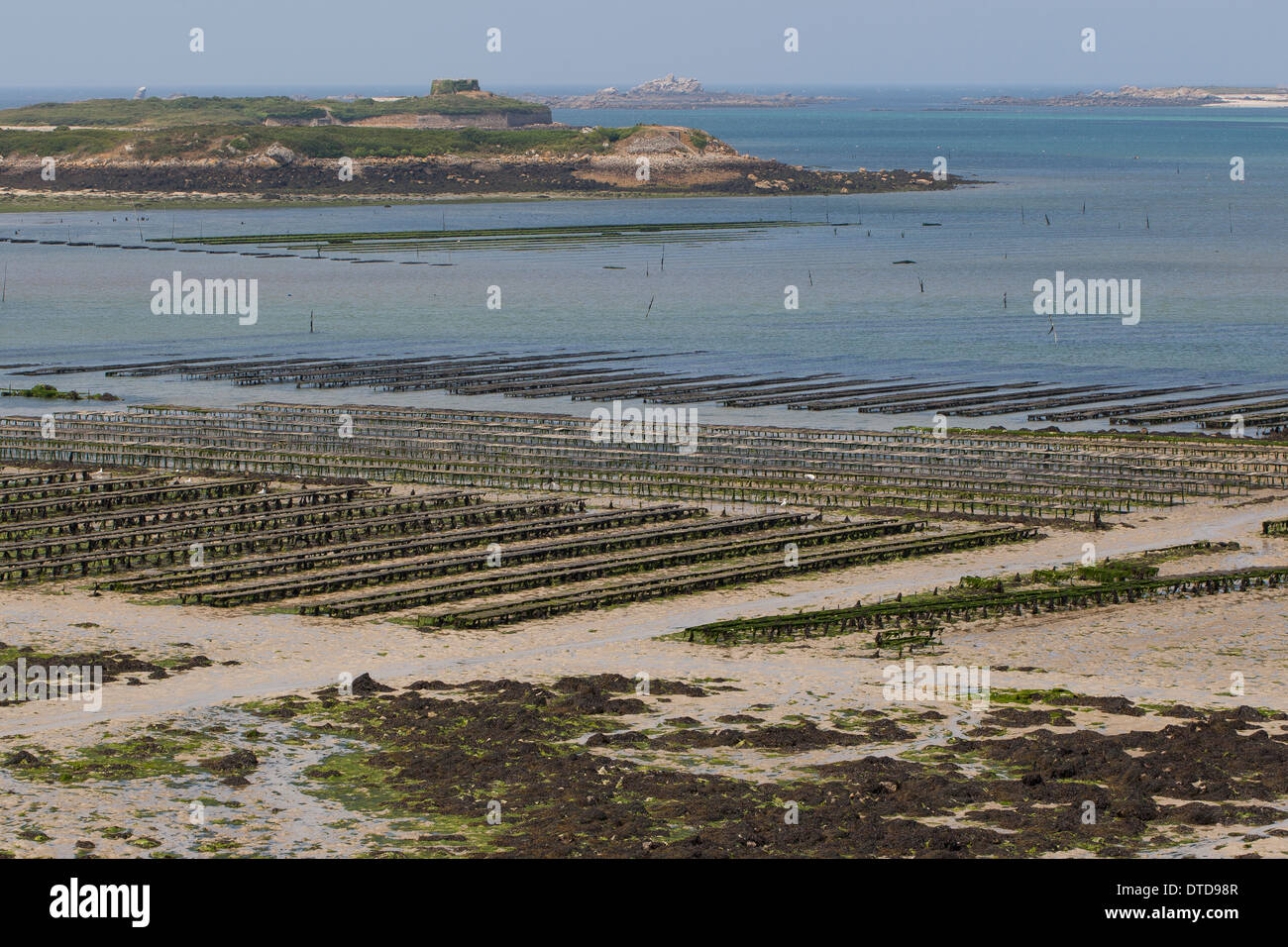 oyster culture, oyster farming, aquaculture, mariculture, Pacific oyster, Austernzucht, Pazifische Auster, Crassostrea Stock Photo