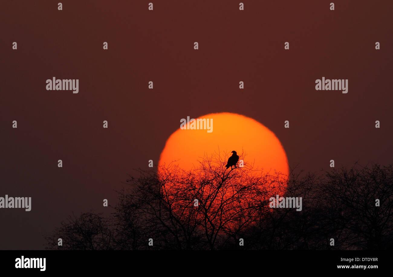 Rising sun in Keoladeo National Park, Bharatpur - Stock Image
