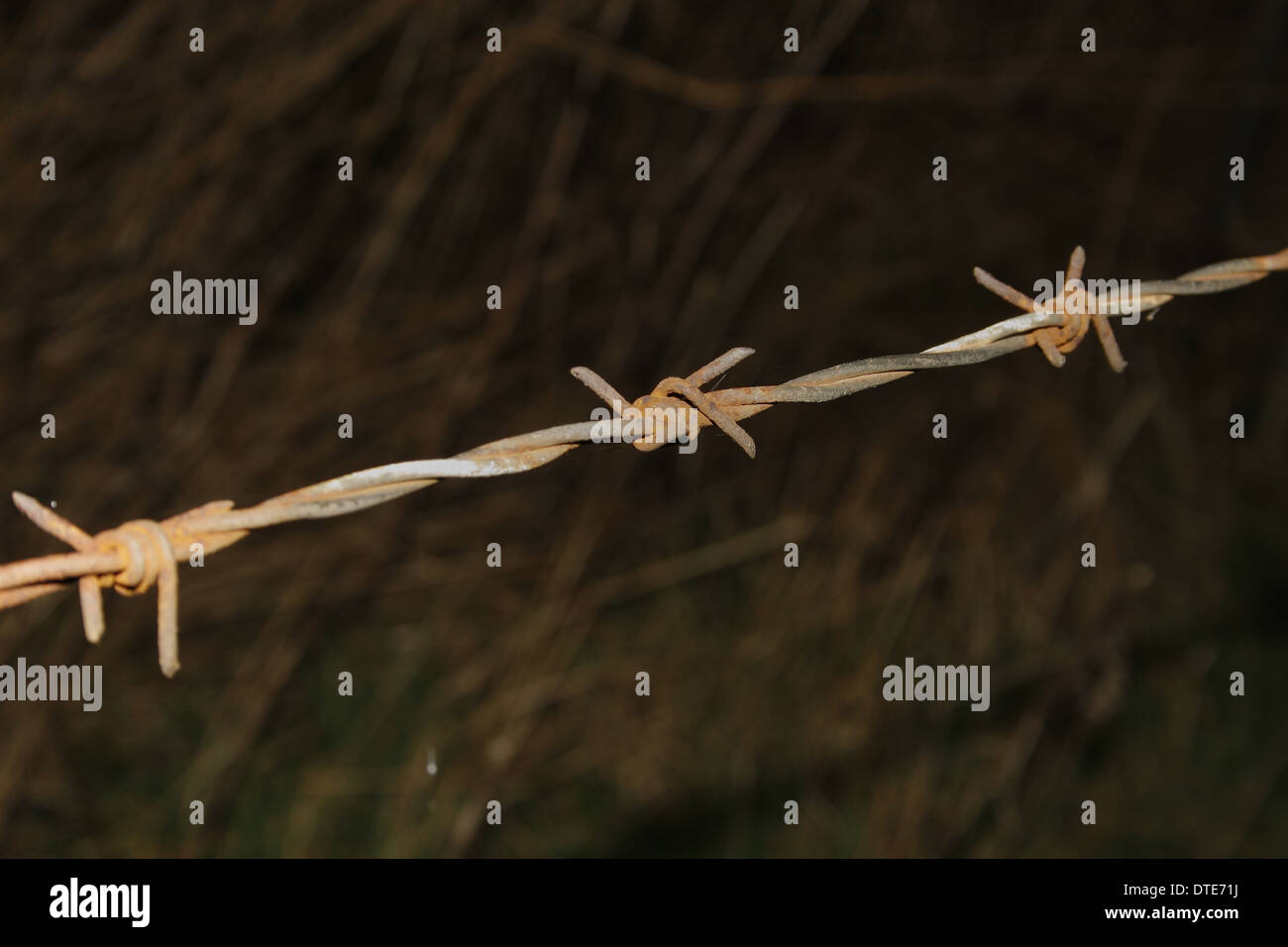 rusty barb wire fence in field near river trent, Nottinghamshire, England, UK - Stock Image