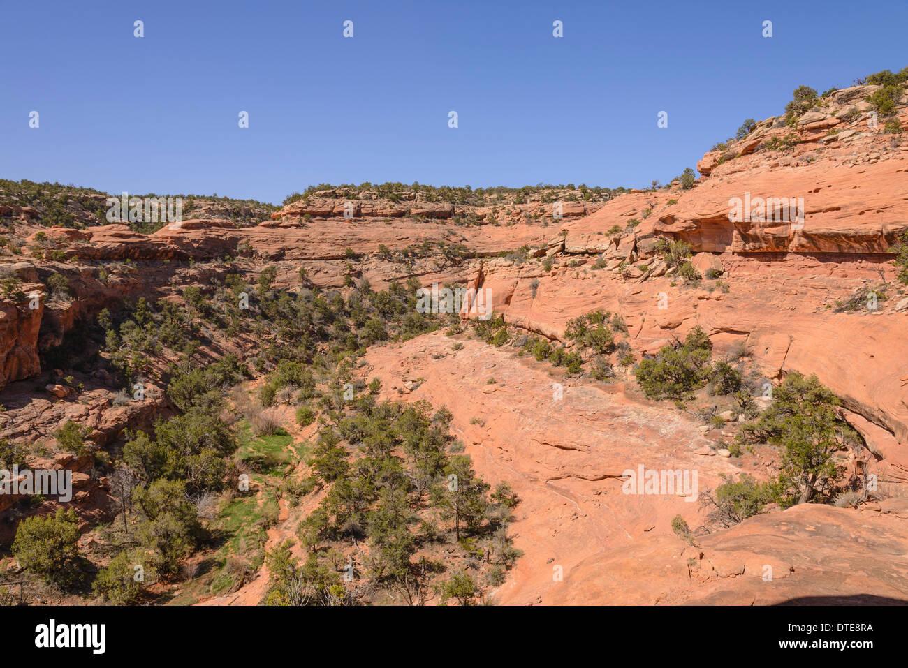 Road Canyon, Cedar Mesa, Utah, USA - Stock Image