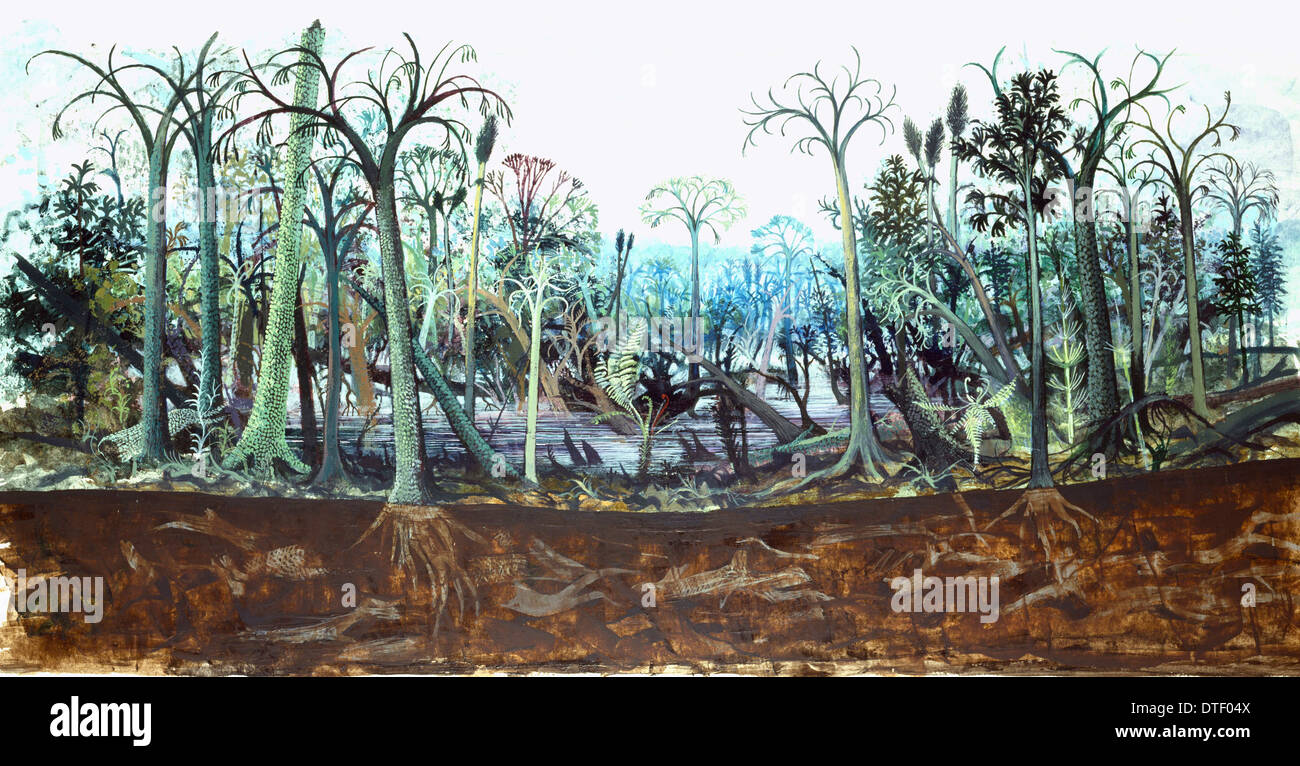 Carboniferous Swamp Stock Photos Carboniferous Swamp Stock Images