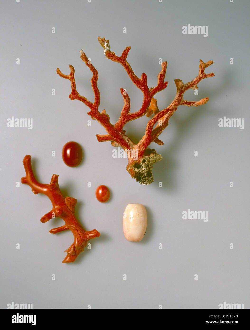 Rough and polished coral specimens Stock Photo