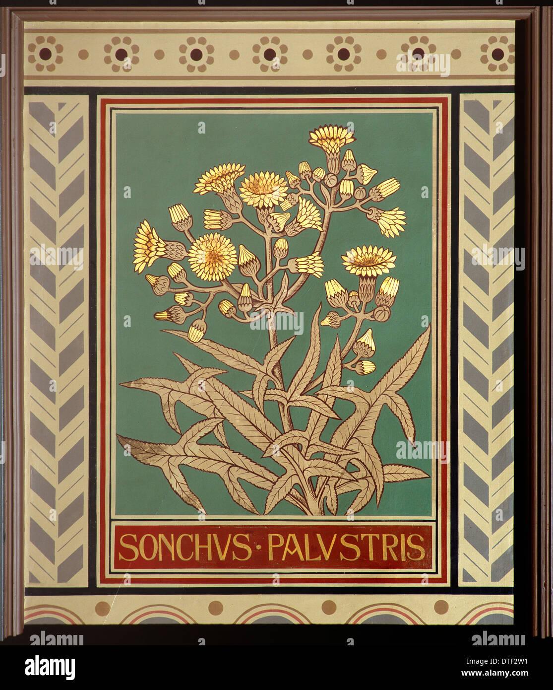 Sonchus palustris, marsh sow-thistle - Stock Image