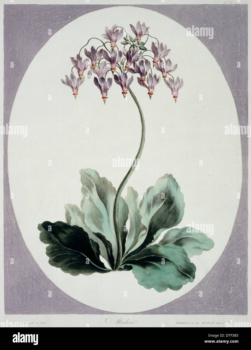 Folio 57 from A Collection of Flowers by John Edwards - Stock Image