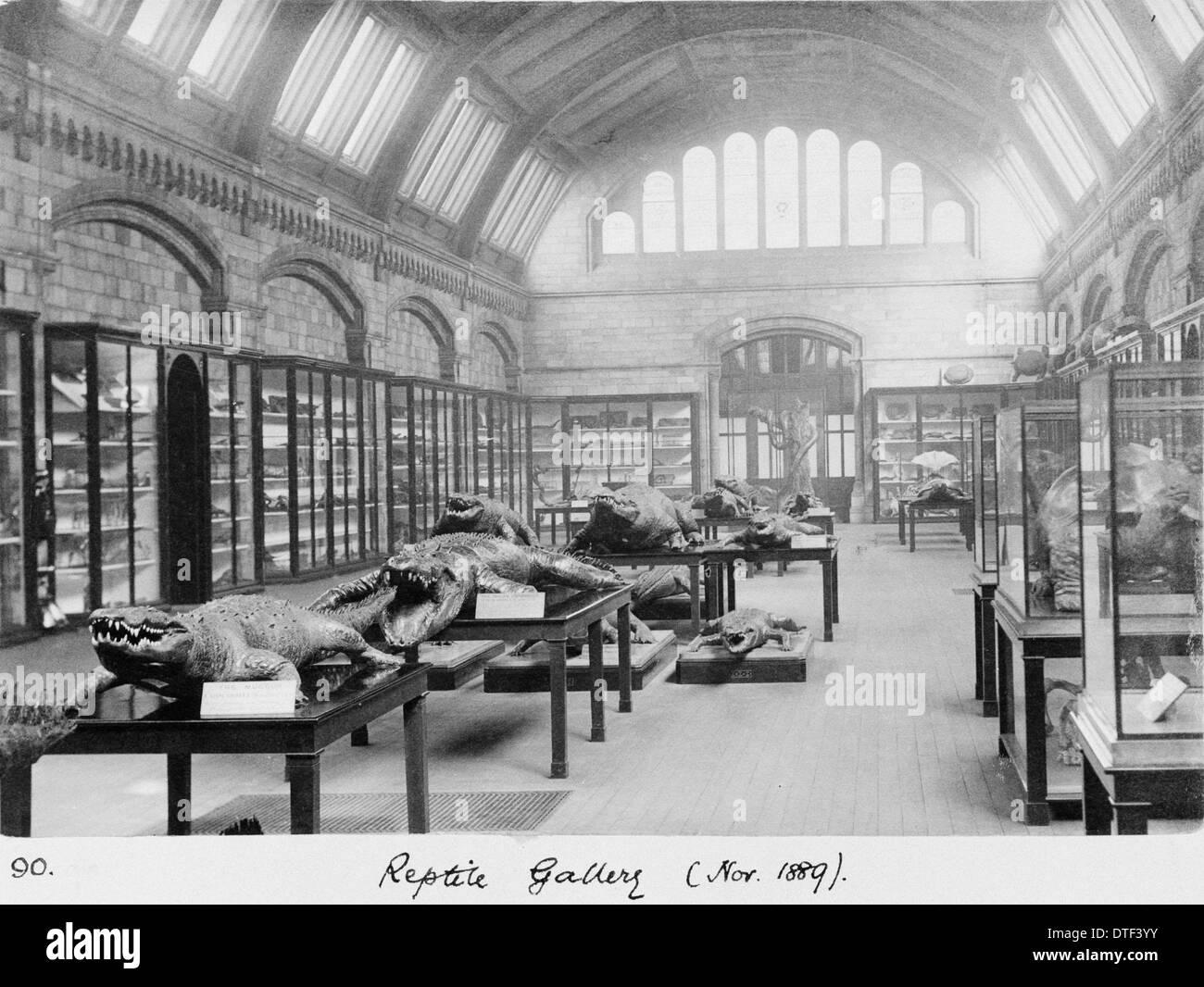 Reptile Gallery, November 1889 - Stock Image