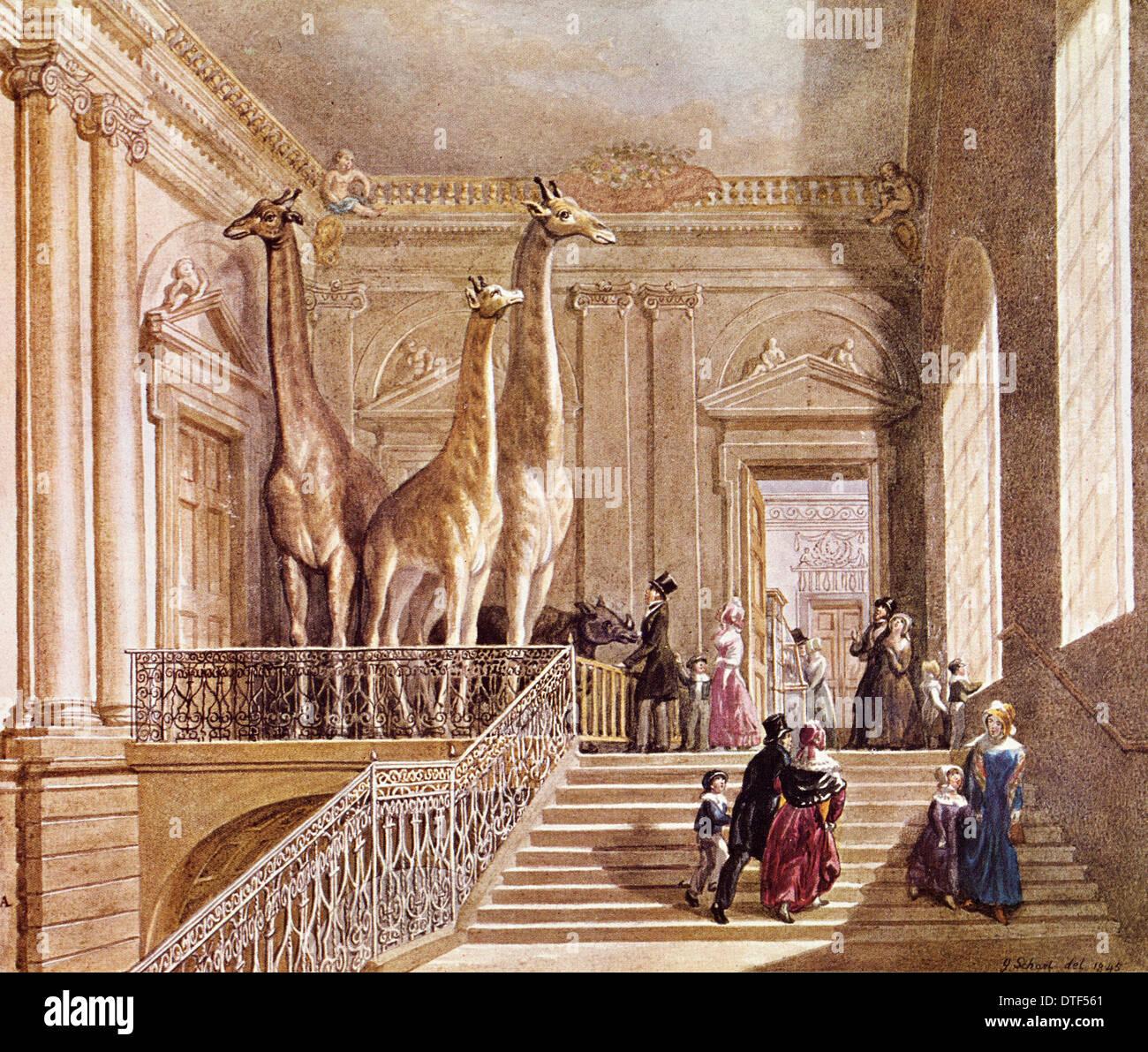 Natural History display at Montagu House - Stock Image