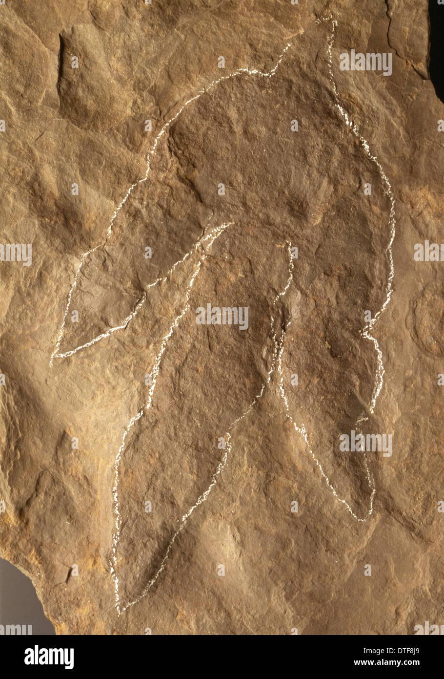 Dinosaur footprint - Stock Image