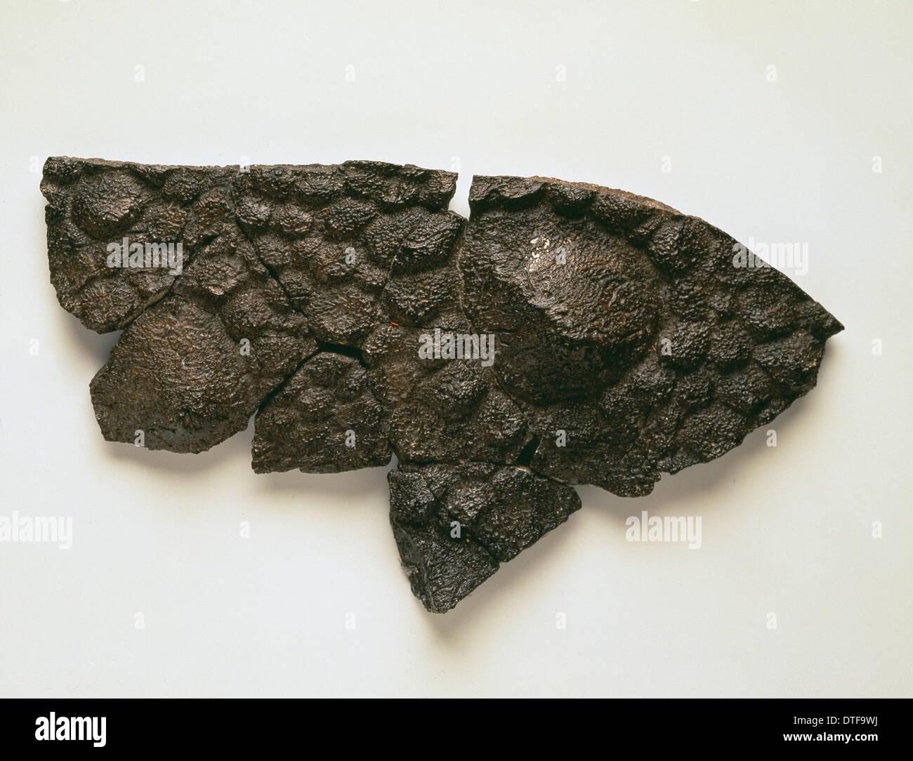 Polacanthus skin impression - Stock Image