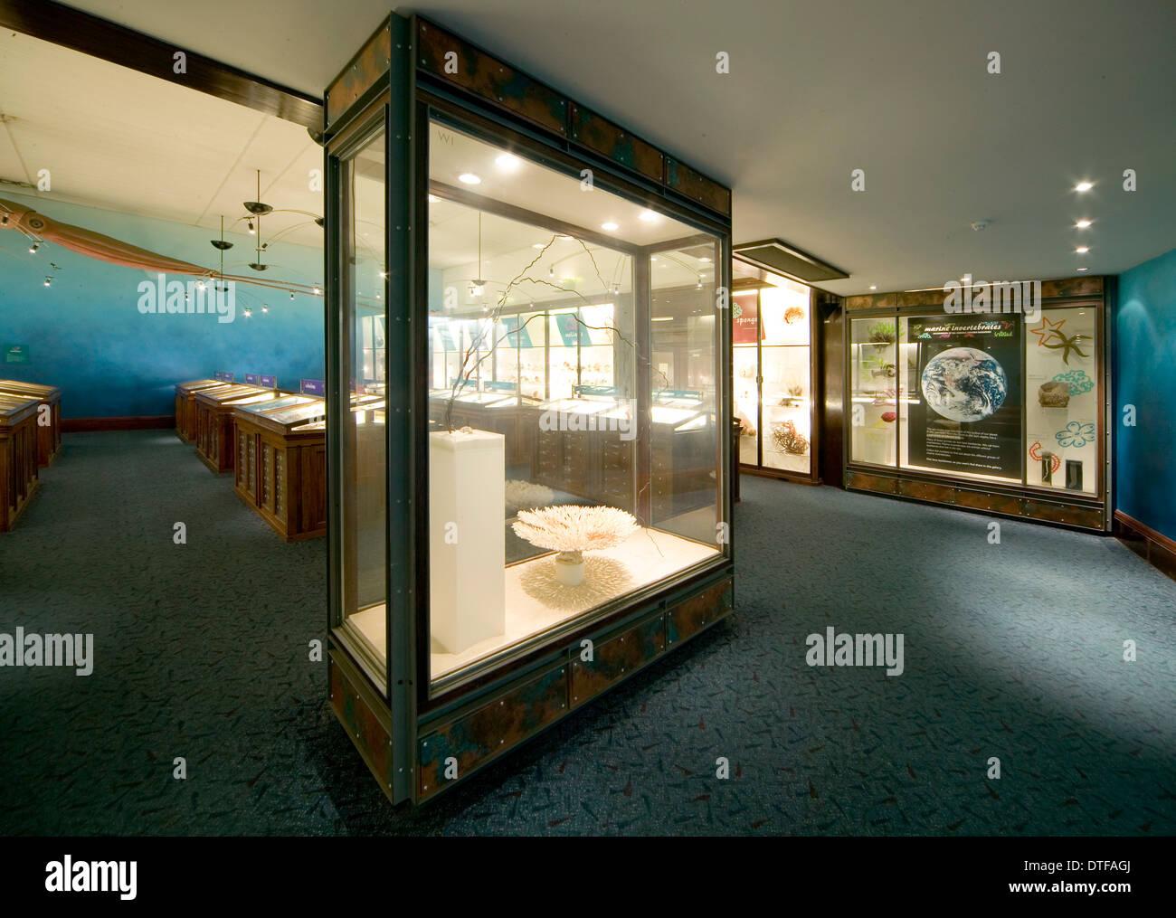Marine Invertebrates at the Natural History Museum - Stock Image