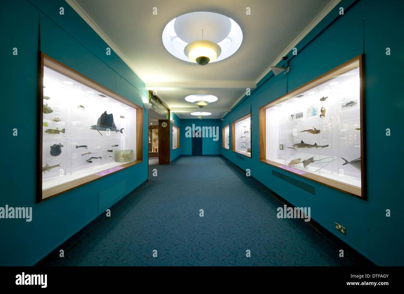 Fish On Display At The Natural History Museum Stock Photo