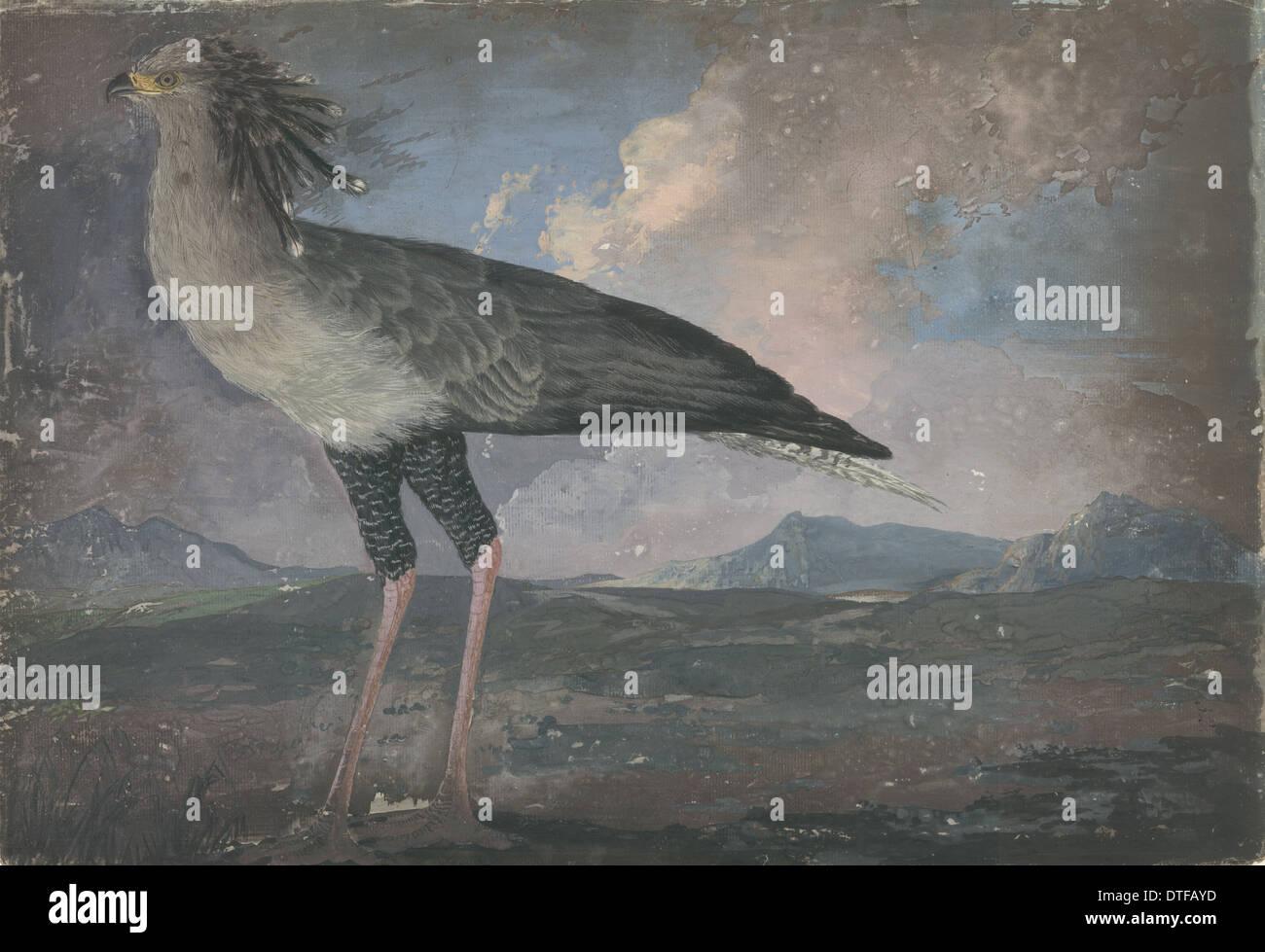 Sagittarius serpentarius, secretary bird Stock Photo