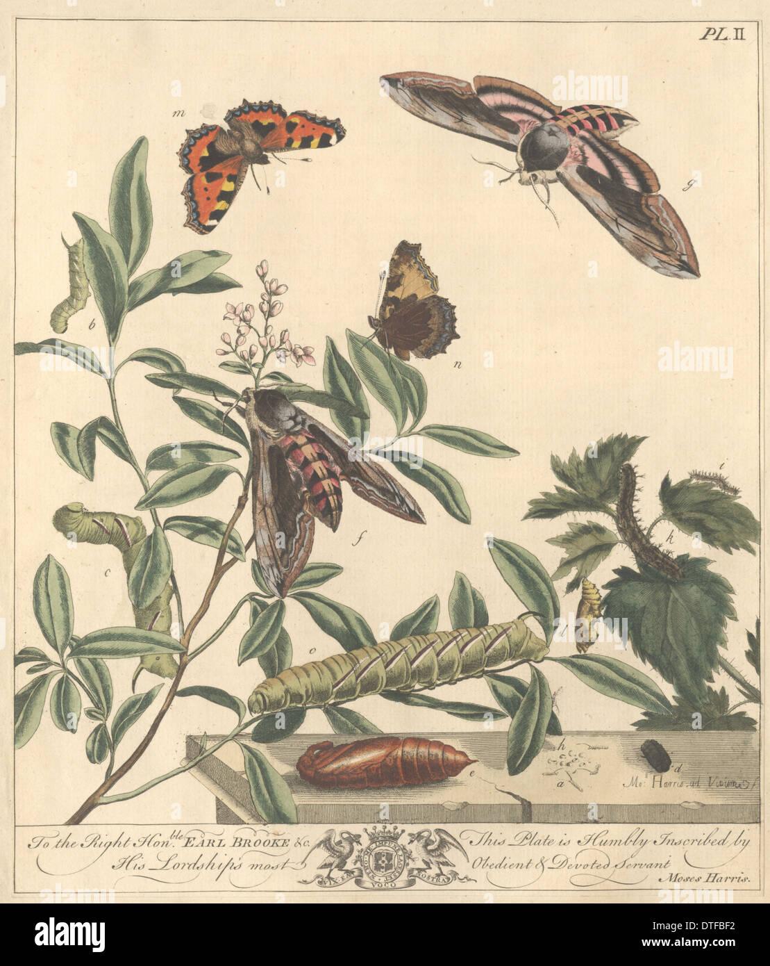 Plate II - Harris, M. (1766) - Stock Image