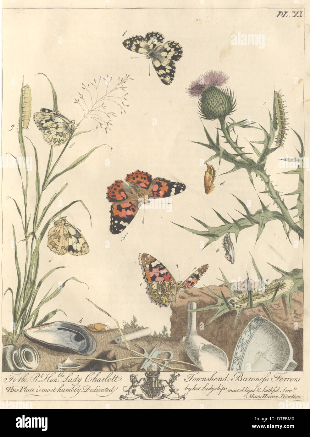 Plate XI, The Painted Lady - Stock Image