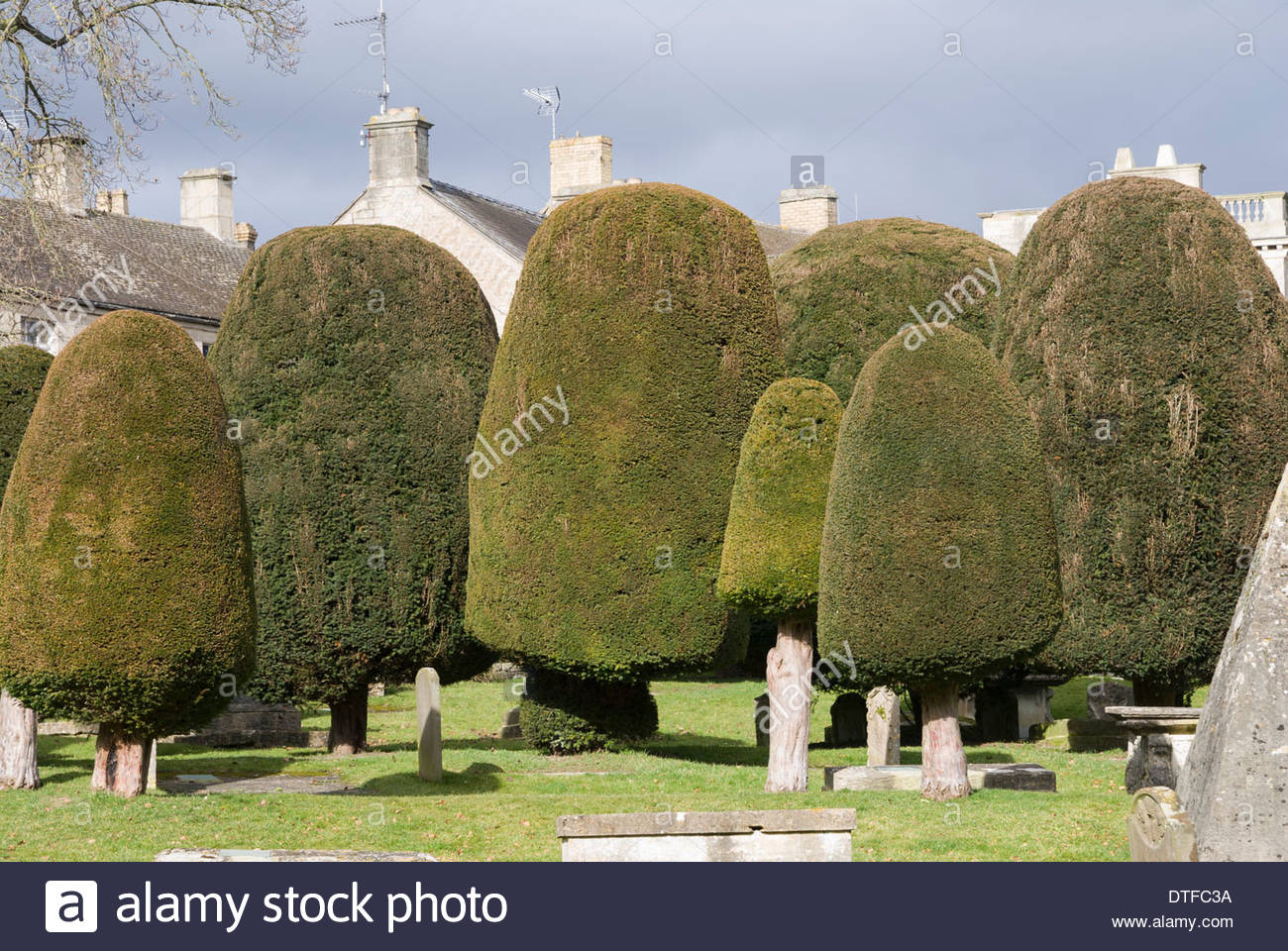 Avenue of clipped yews in the churchyard of St Mary's Church, Painswick, Gloucestershire - Stock Image
