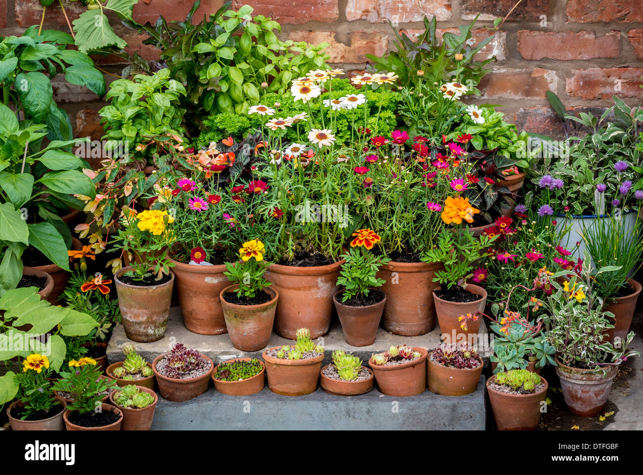Herbs and flowers growing in pots in domestic garden - Stock Image