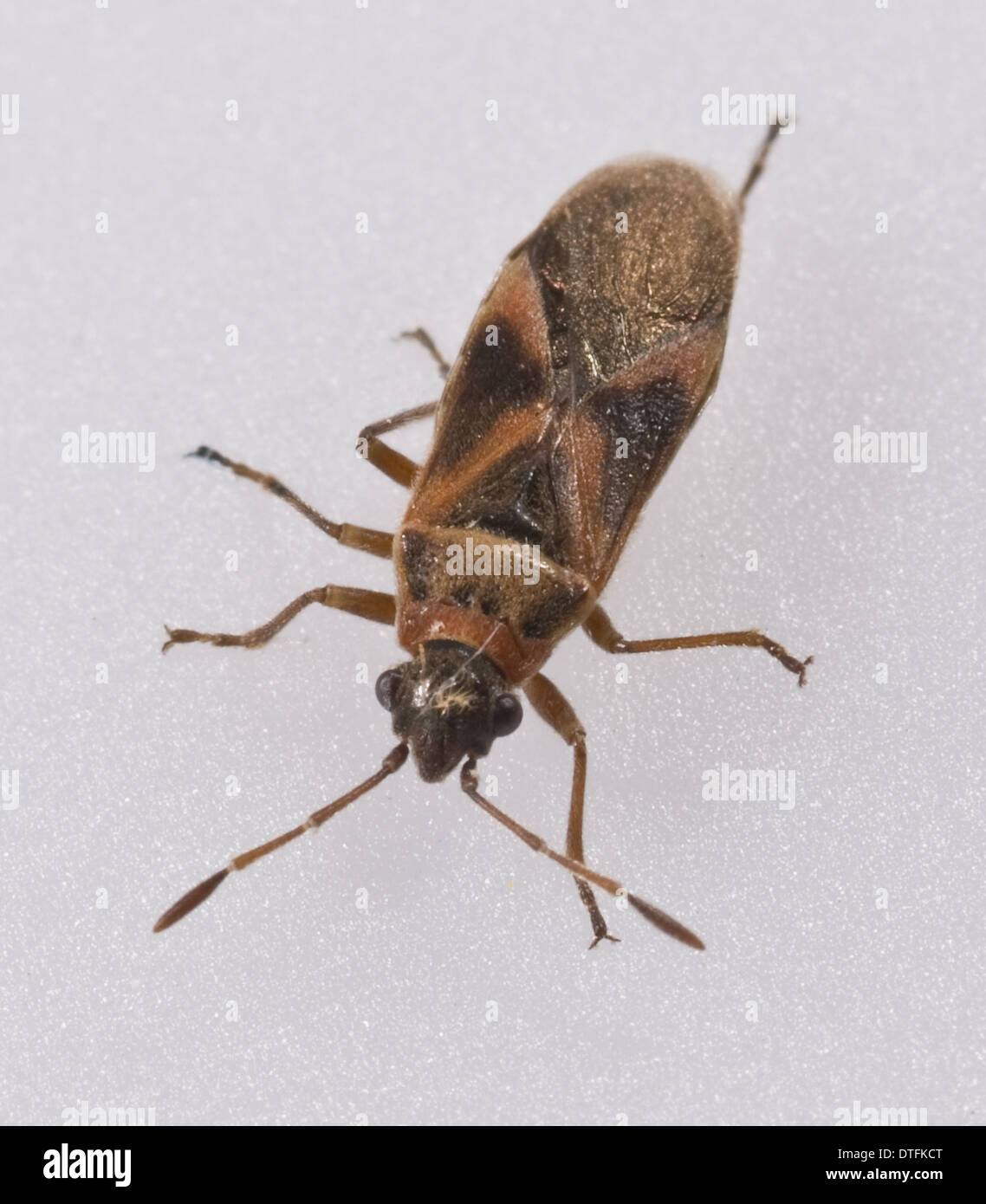 'Mystery bug' found in NHM Wildlife garden - Stock Image