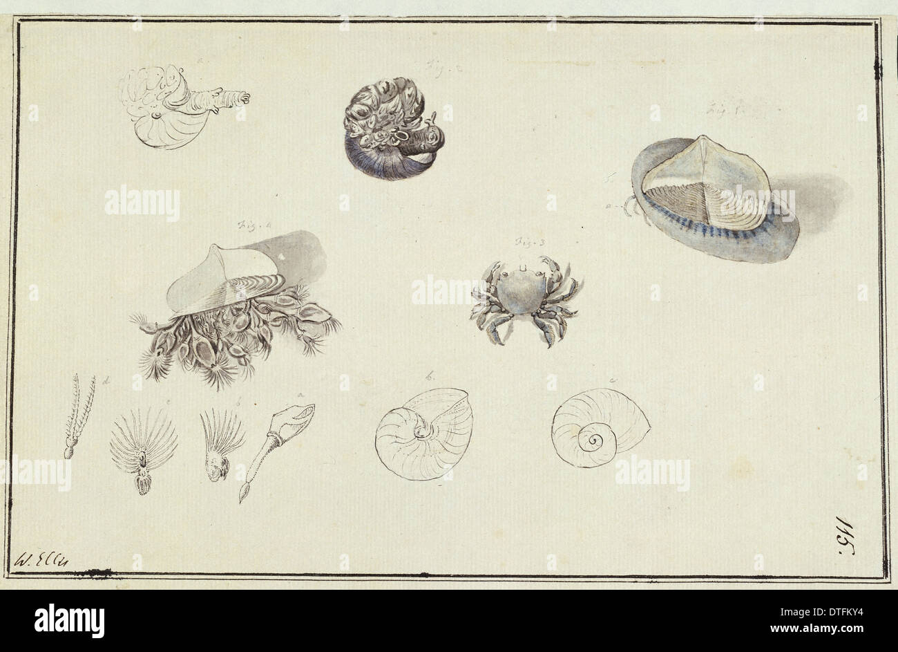 Collection of sea creatures - Stock Image
