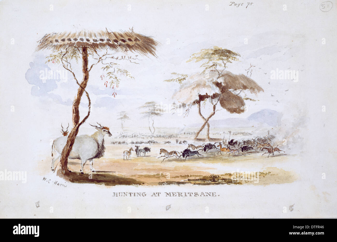 Hunting at Meritsane (Plate 51/52) - Stock Image