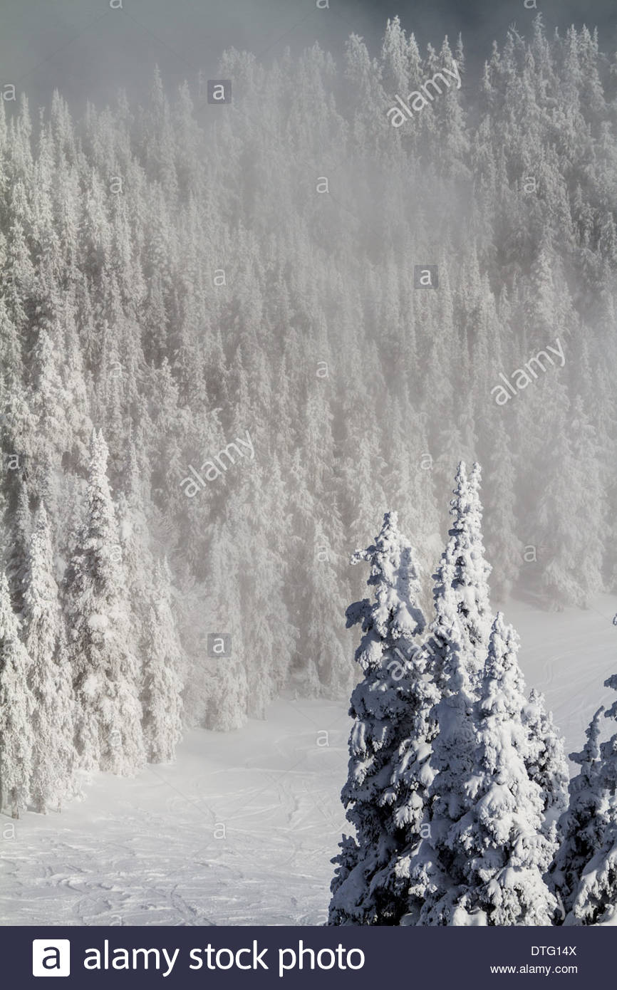 Winter's Hold - Frozen Forest - Stock Image