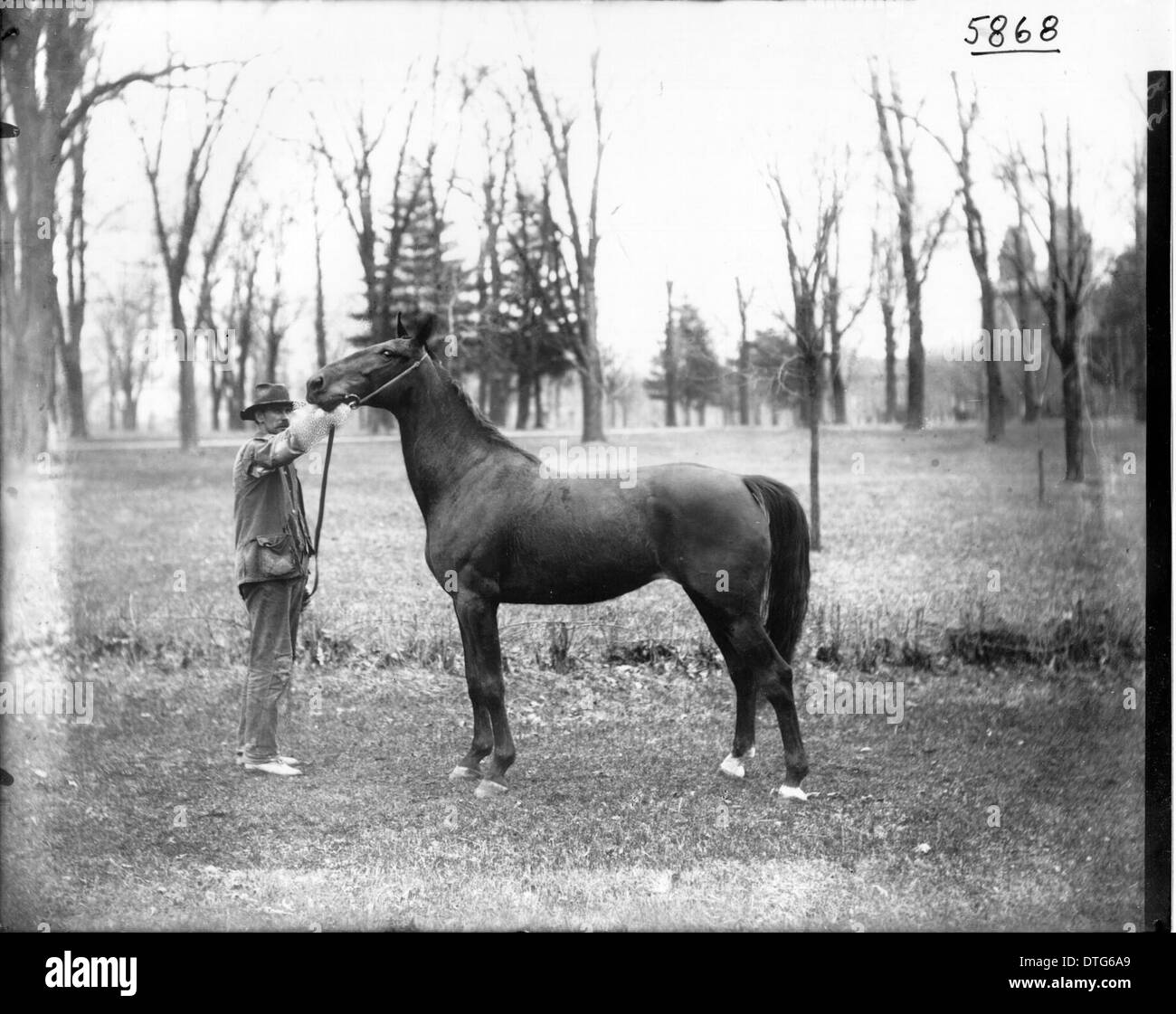 Morris Weatherby with horse 1904 - Stock Image
