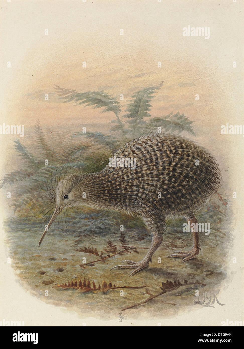 Neuseeland Little spotted Kiwi Ansichtskarte Apterix owenii
