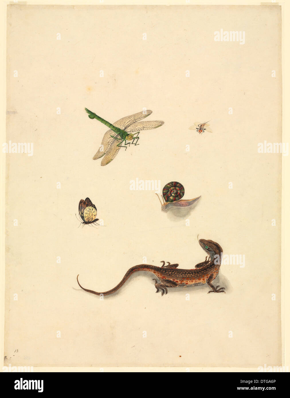 Plate 101 from the John Reeves Collection (Zoology) - Stock Image