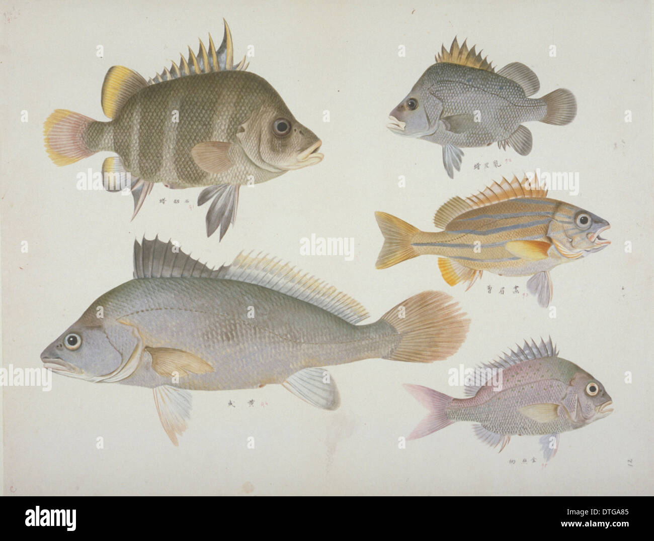 Plate 109 from the John Reeves Collection - Stock Image