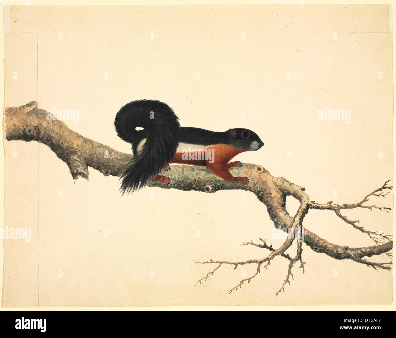 Plate 79 of the Reeves Collection (Zoology) - Stock Image