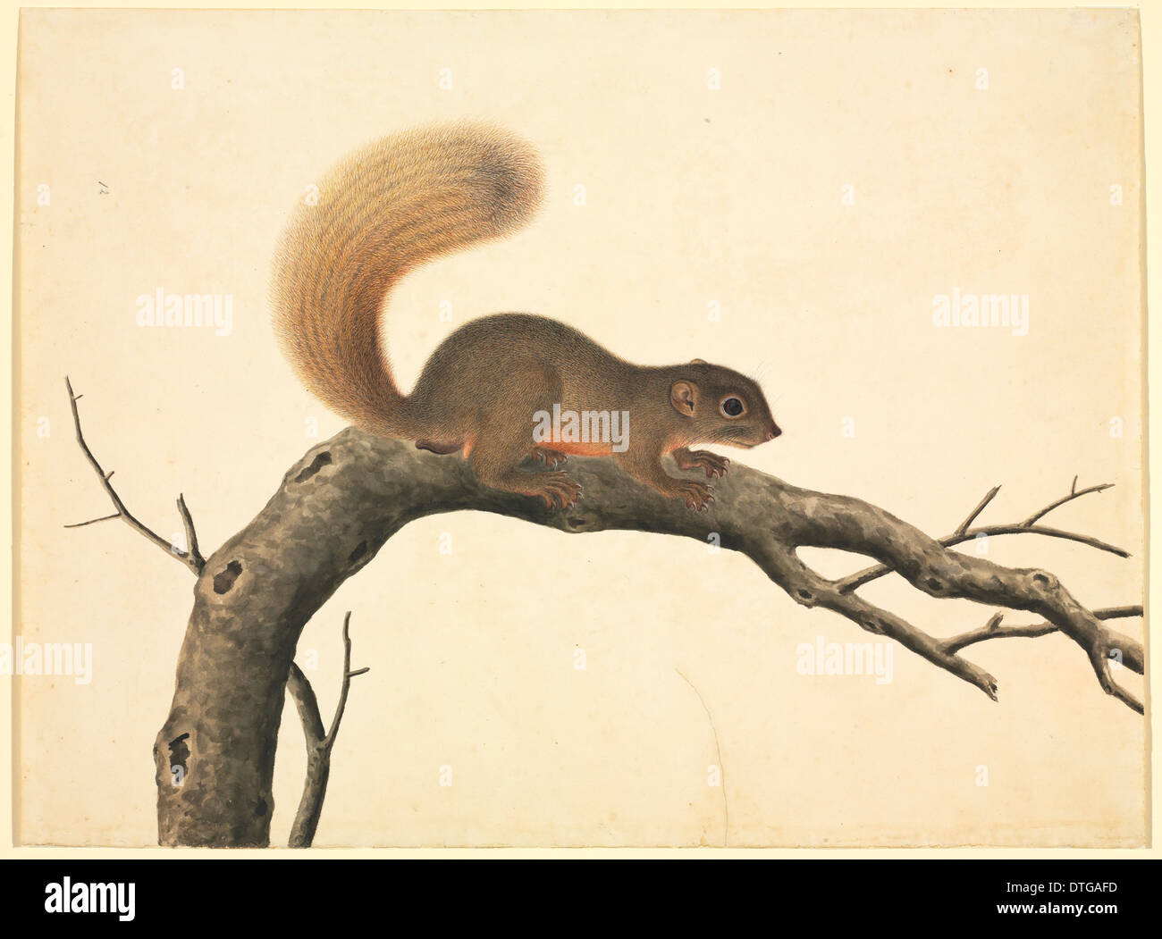 Plate 80 of the Reeves Collection (Zoology) - Stock Image