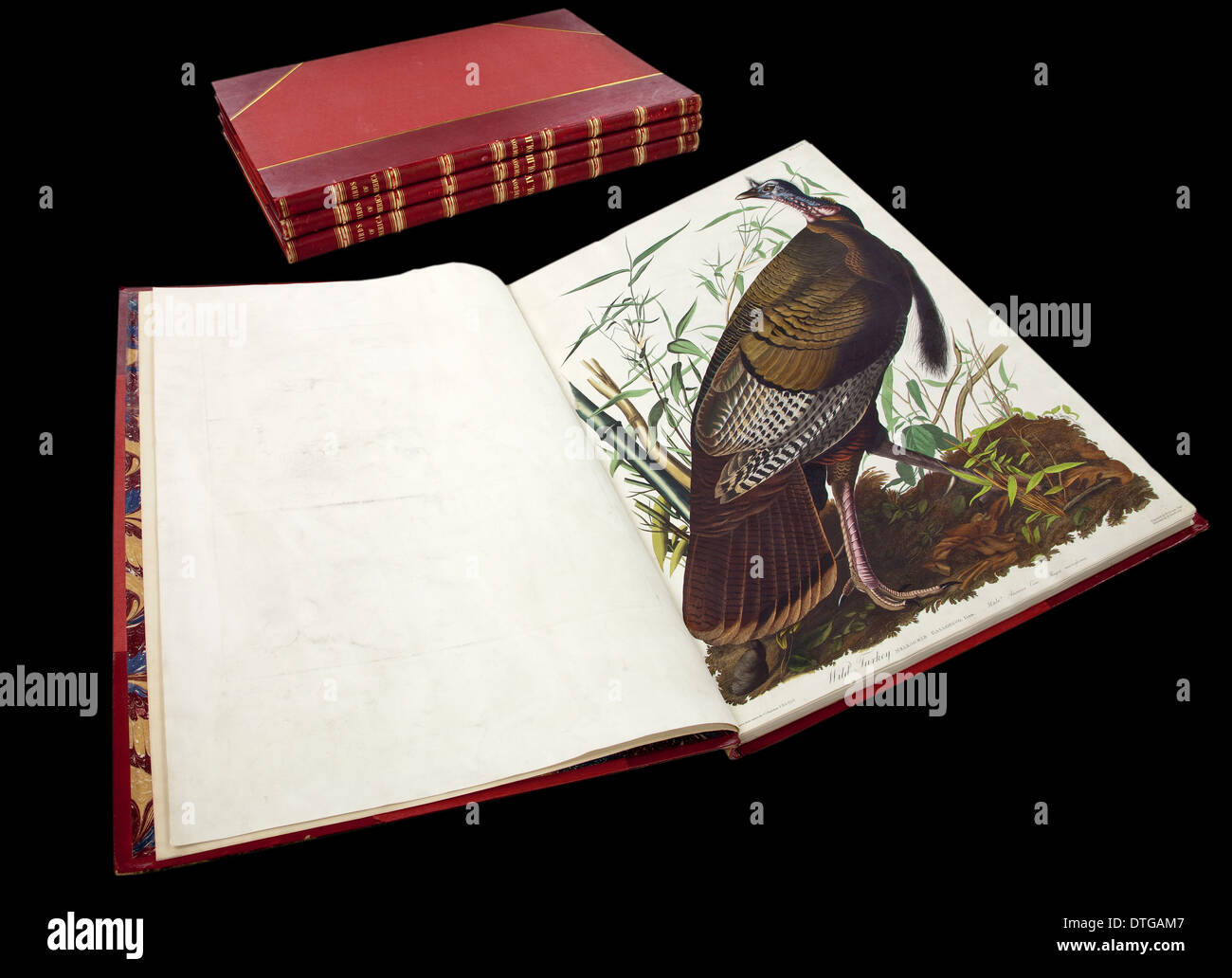 Bound copy of The Birds of America by John James Audubon, showing plate 1, the wild turkey. - Stock Image