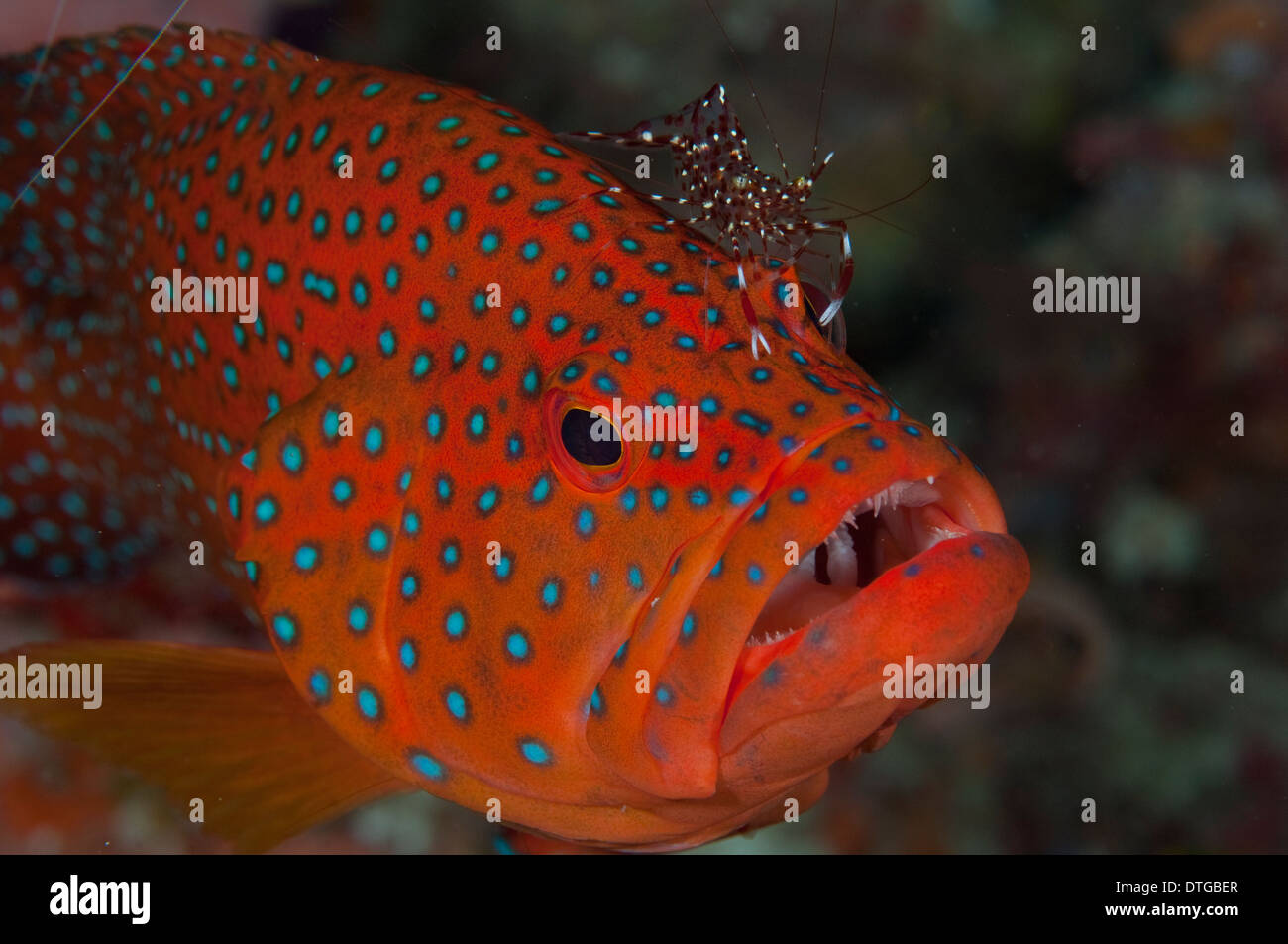 Red Spots Fish Stock Photos & Red Spots Fish Stock Images - Alamy