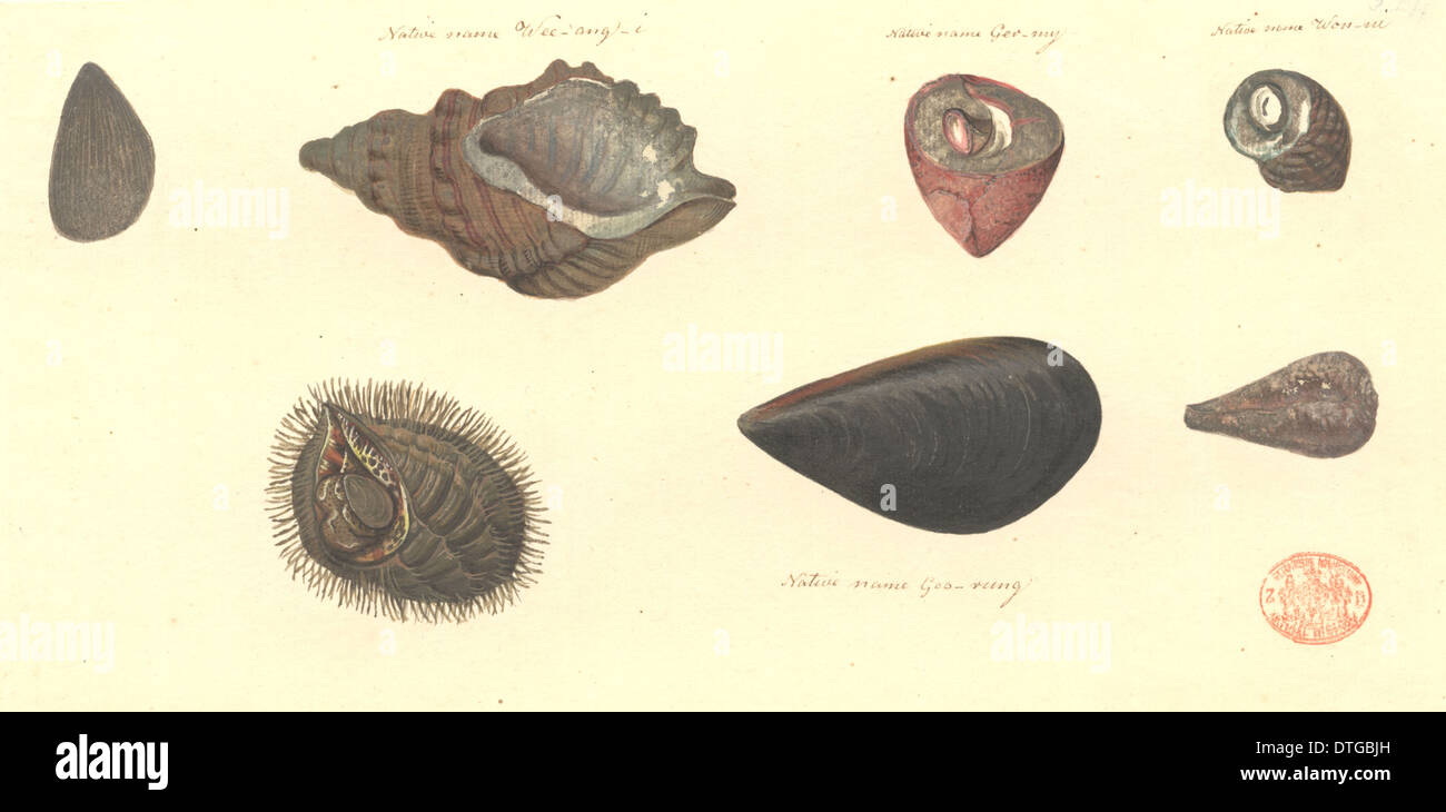 Seven molluscs, including two bivalves and five gastropods - Stock Image