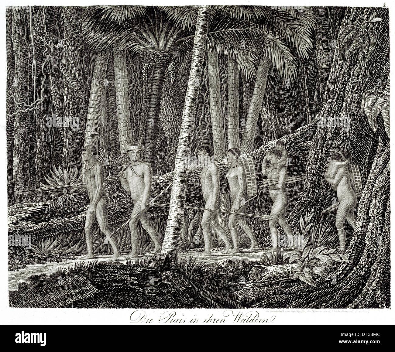 Die Puris in ihren Waldern - Stock Image