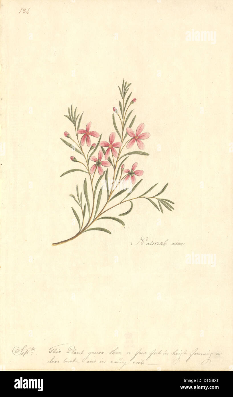 Watercolour 67 from the Watling Collection - Stock Image