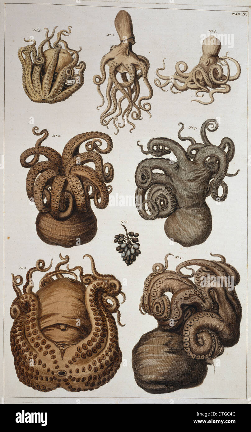 Seven squid and octopuses - Stock Image