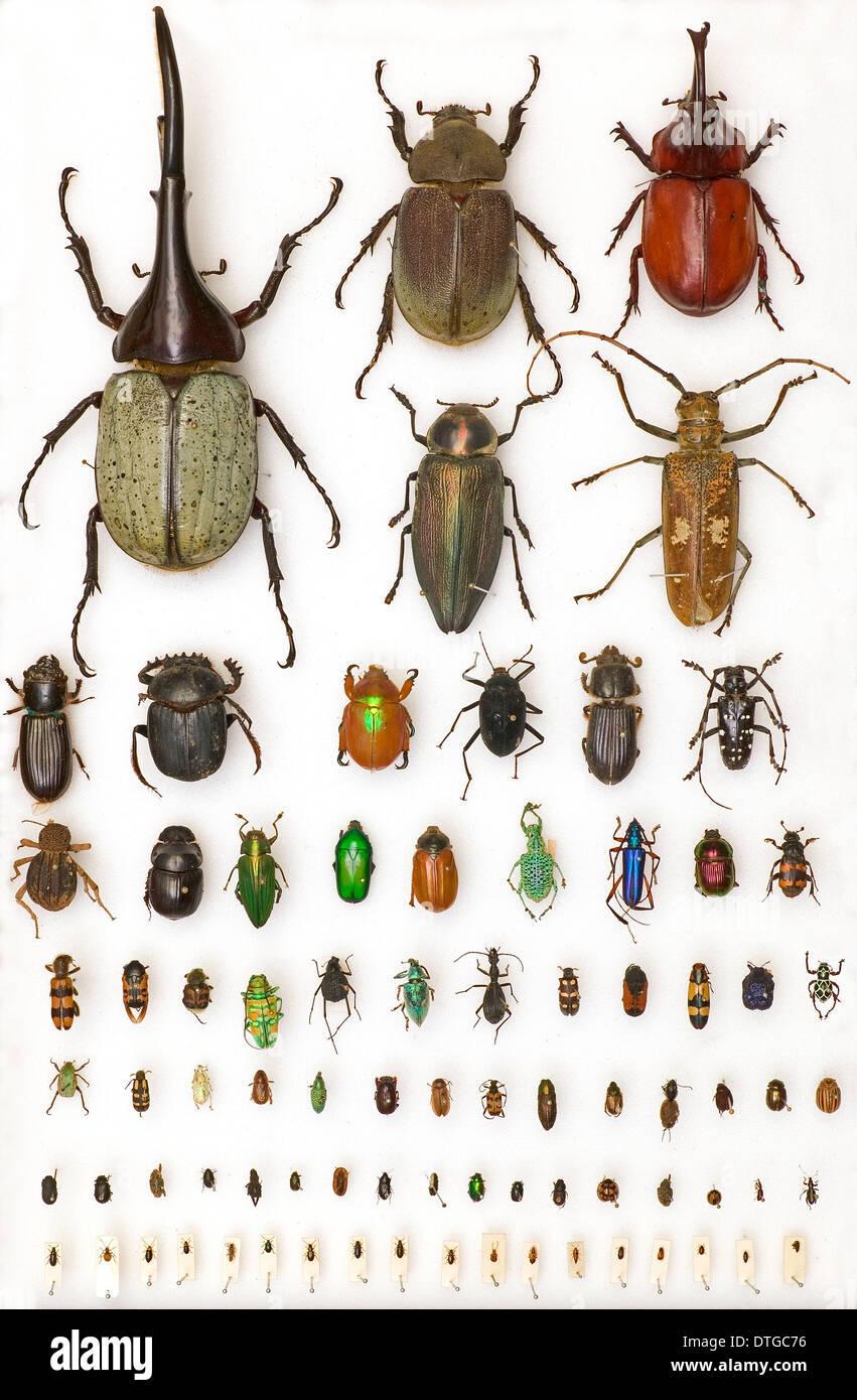 Entomology Specimens - Stock Image