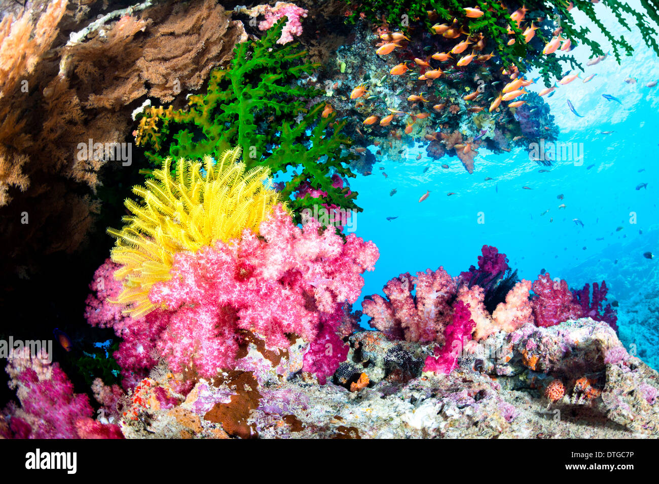 A beautiful, exotic tropical reef covered with vibrant soft and hard corals and a yellow crinoid in clear water. - Stock Image