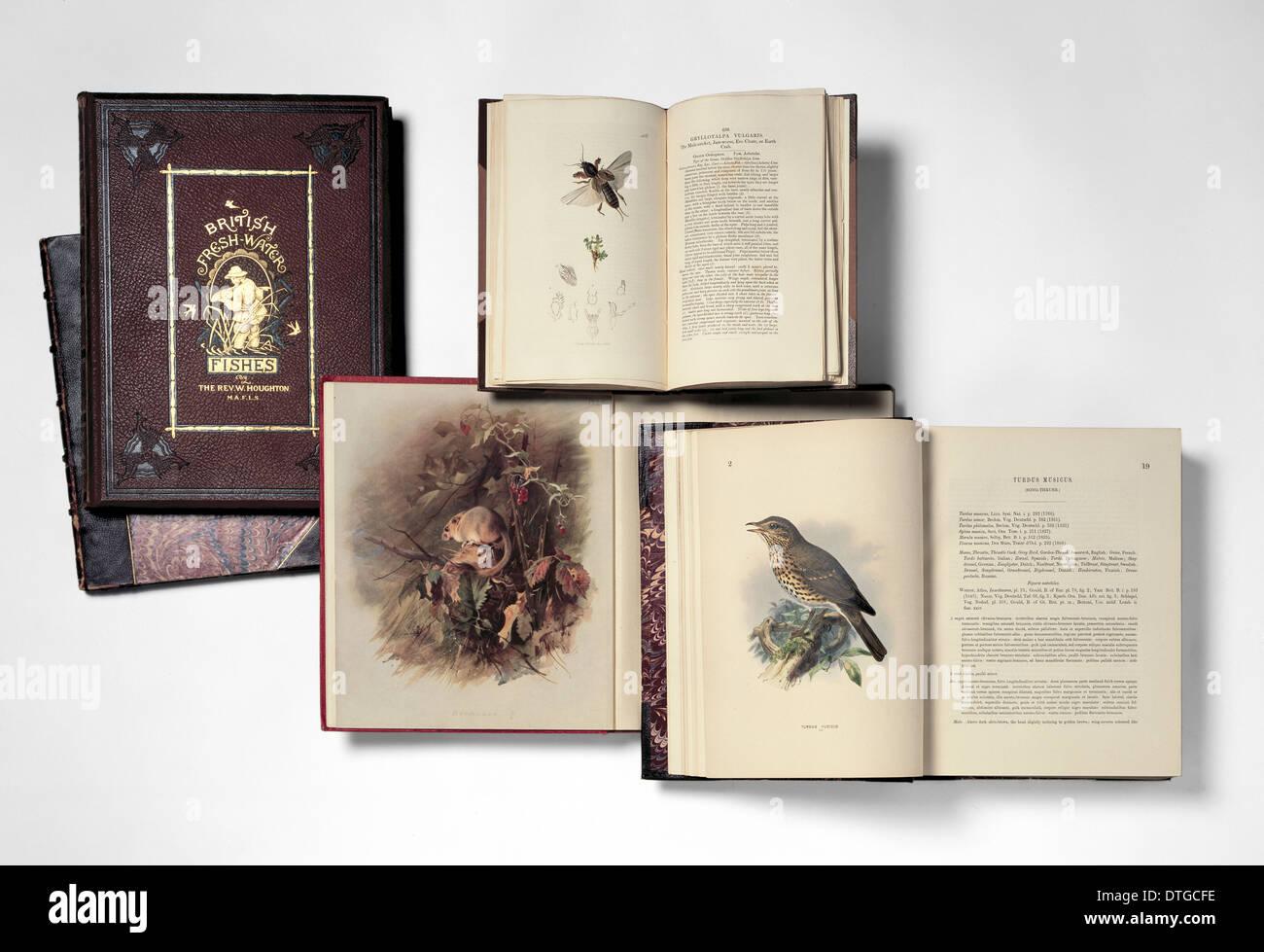 Illustrated books - Stock Image