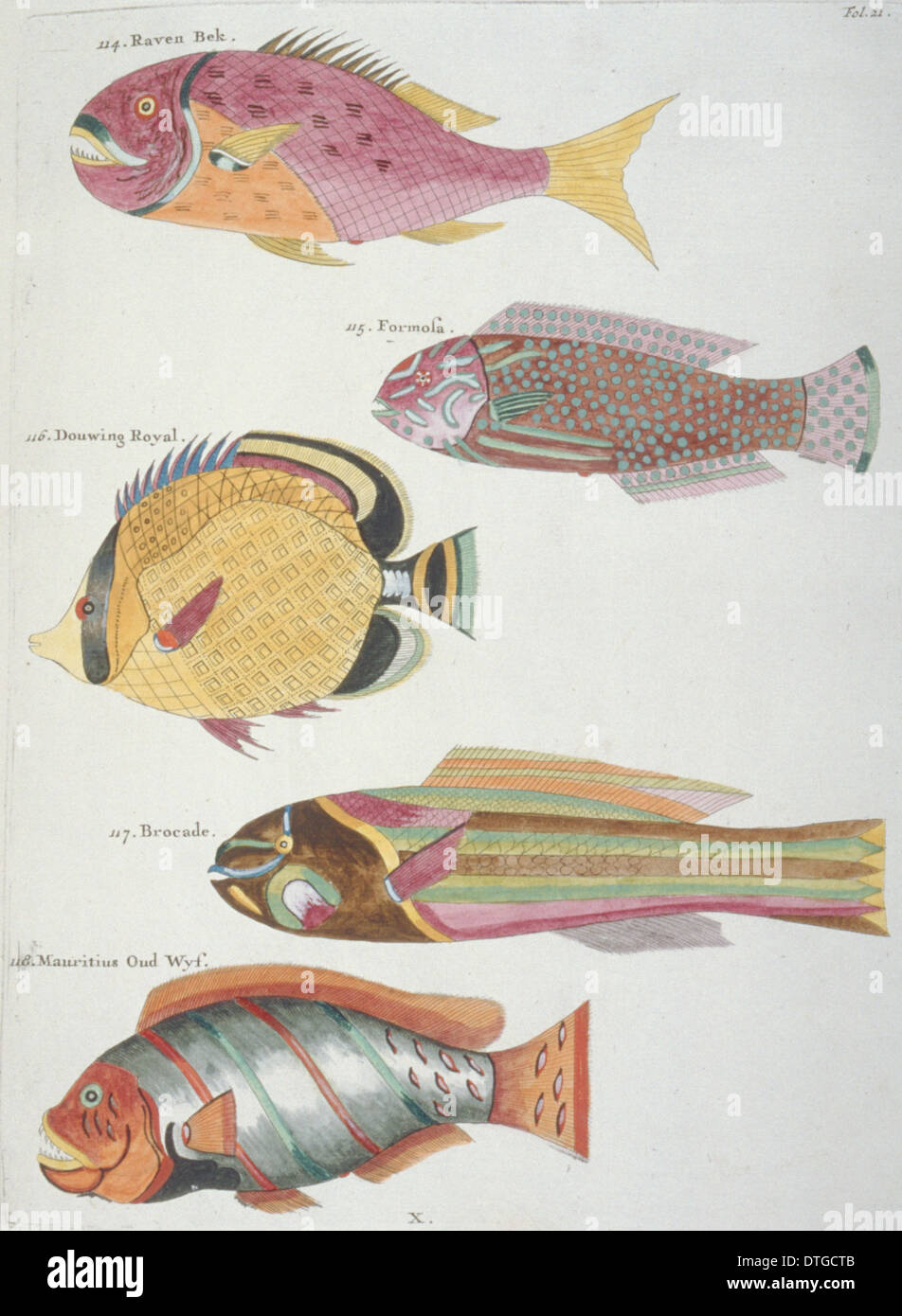 Colourful illustration of five fish Stock Photo