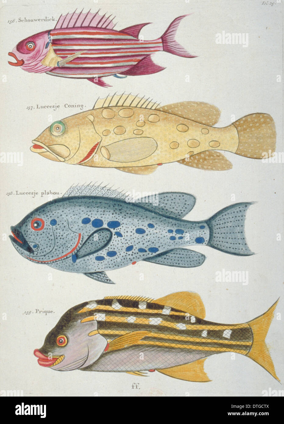 Colourful illustration of four fish Stock Photo
