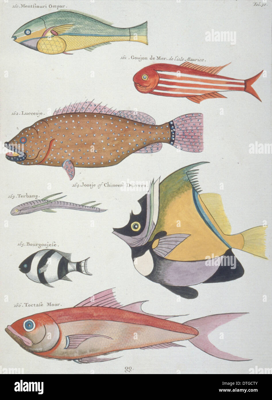 Colourful illustration of seven fish Stock Photo