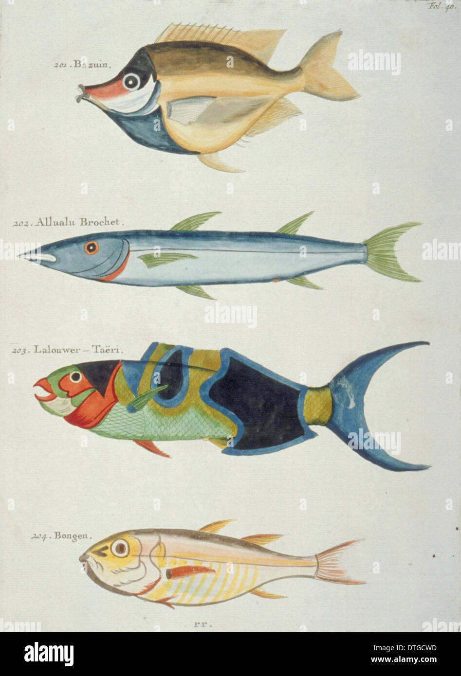 Colourful illustration of four fish - Stock Image