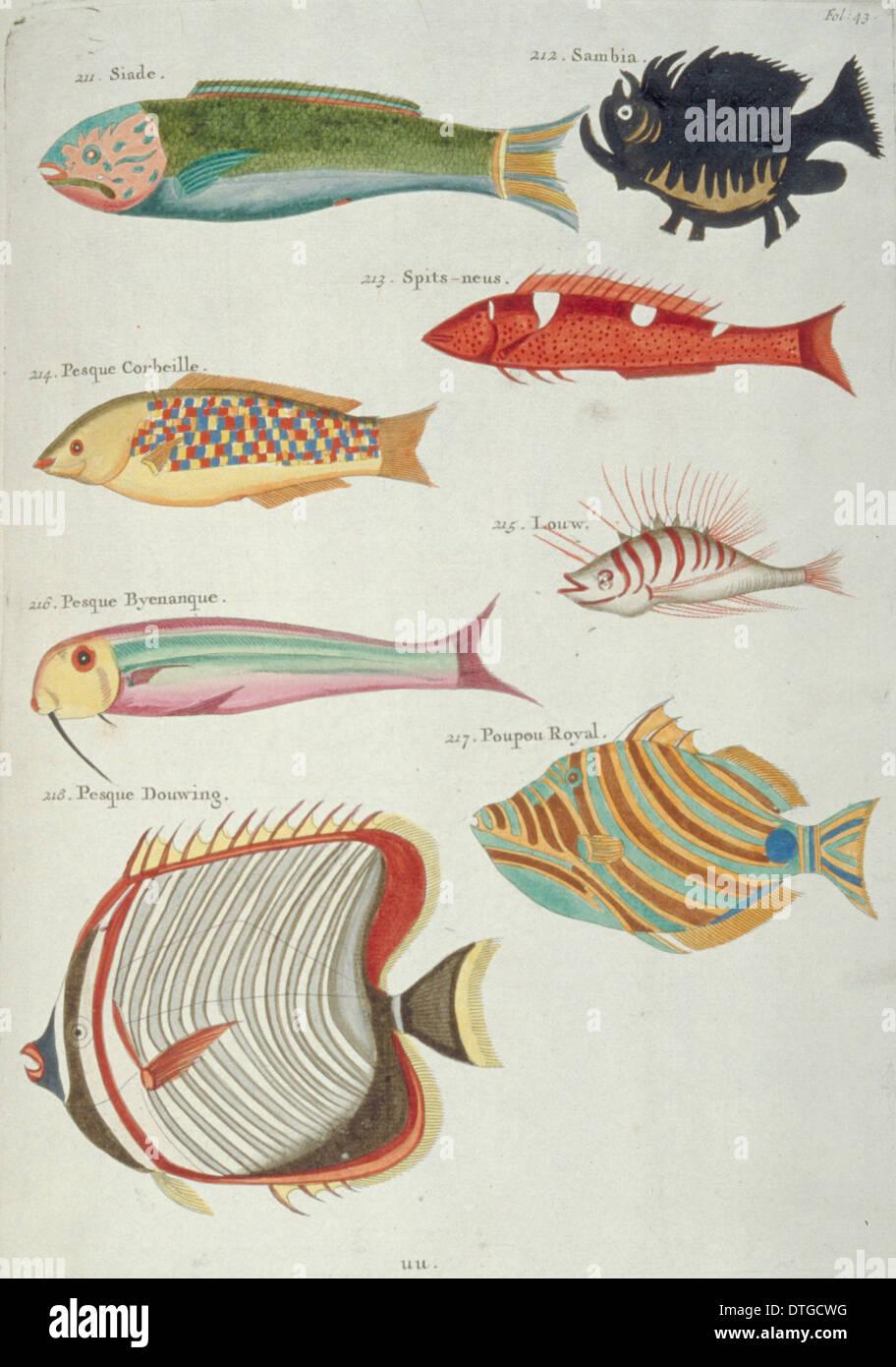 Colourful illustration of eight fish Stock Photo