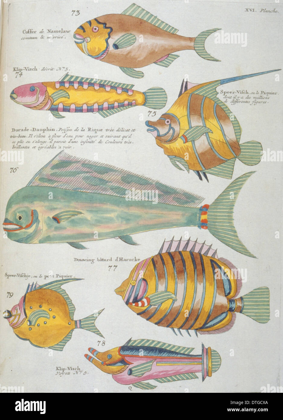 Colourful illustration of seven fish - Stock Image