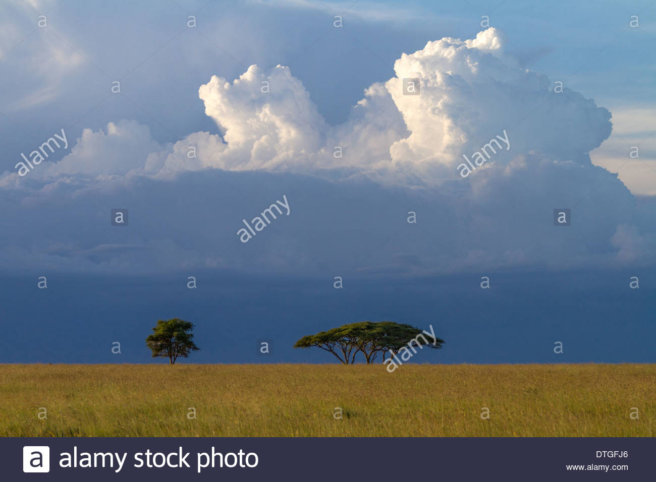 Clouds Over Acacia Trees On The African Savanna, Serengeti National Park, Tanzania - Stock Image