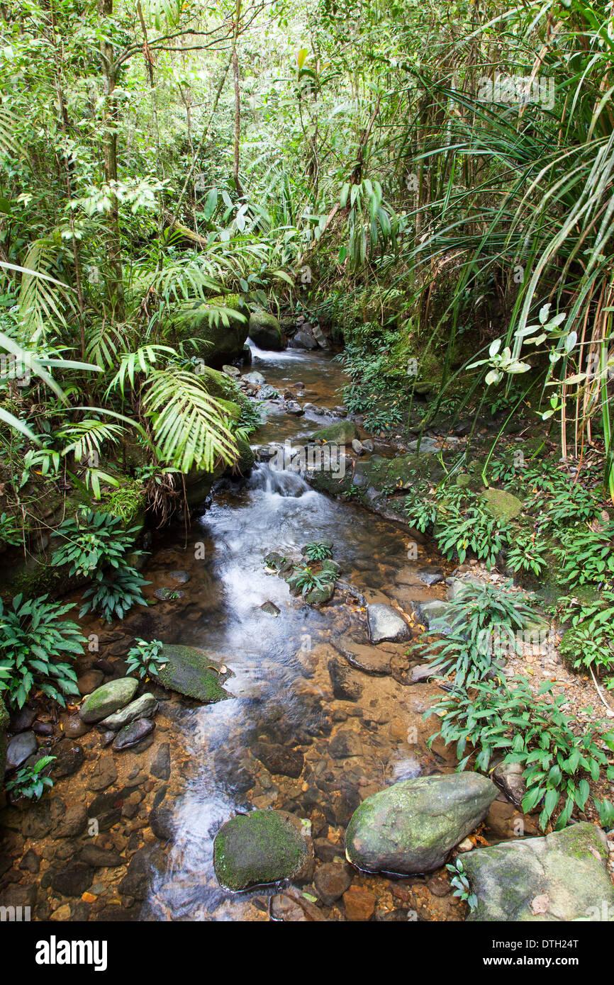 Rainforest in Mount Kinabalu Park, Borneo, Malaysia - Stock Image