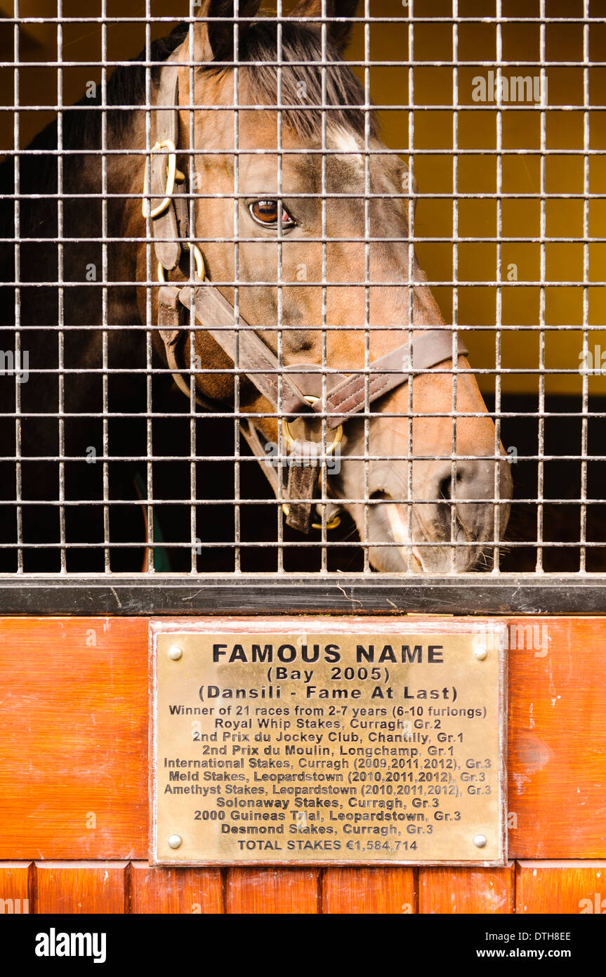 Famous Name stud horse in his stable at the Irish National Stud. - Stock Image